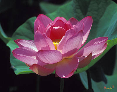 Photograph - Lotus--secrets Within 24k by Gerry Gantt