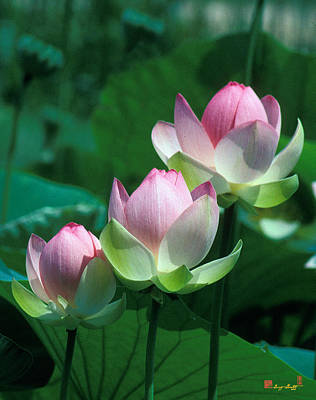 Photograph - Lotus--stepping Stones 24p by Gerry Gantt