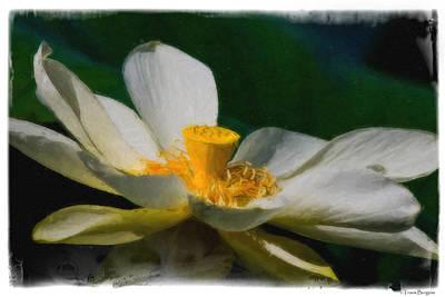 Lotus Art Print by Travis Burgess