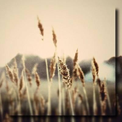 Marsh Photograph - Lou Reeds by Penni D'Aulerio