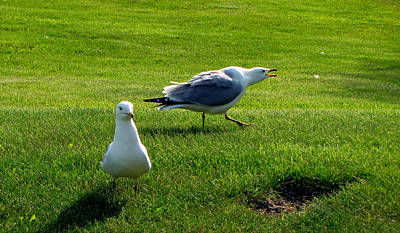 Photograph - Loud Mouth Seagull by Ms Judi