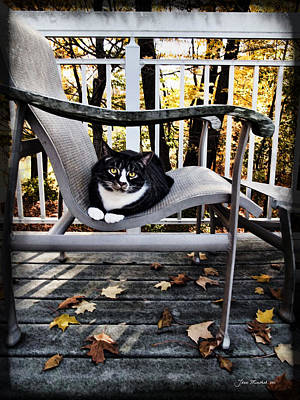 Photograph - Louis And The Leaves by Joan  Minchak