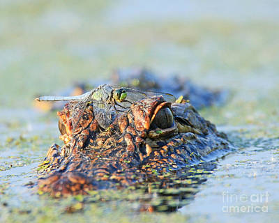 Art Print featuring the photograph Louisiana Alligator With Dragon Fly by Luana K Perez