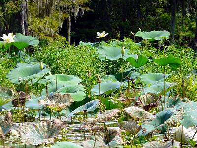 Photograph - Louisiana Lily Pads by Rdr Creative