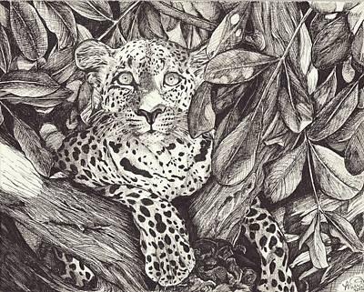 Cheetah Drawing - Lounging by Melissa Dzierlatka