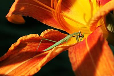 Orchid Praying Mantis Photograph - Louva Deus 1 by Alberto Filho