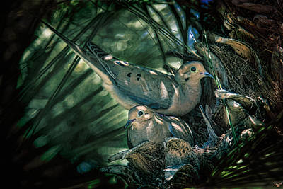 Photograph - Love A Dove Dove by Chris Lord
