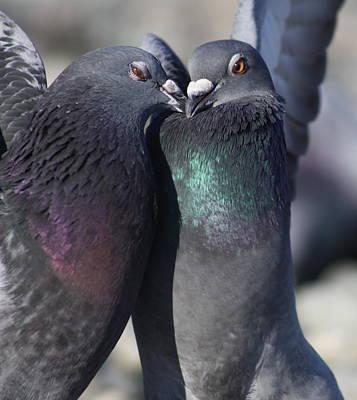 Bath Time - Love Birds by Cathie Douglas