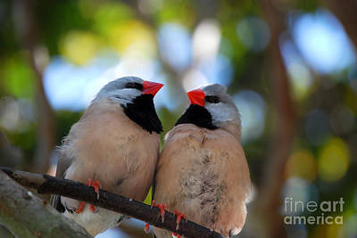 Art Print featuring the photograph Love Birds by Linda Mesibov