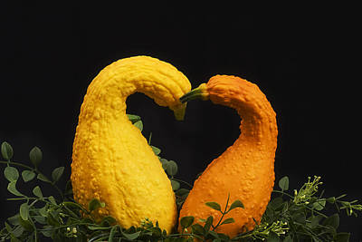 Photograph - Love Squash by Trudy Wilkerson