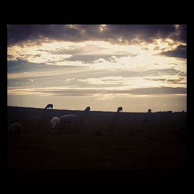 Sheep Photograph - Love This. Strolling Through Kent To My by Chris Mayo