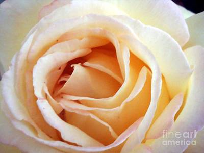 Photograph - Love Unfurling by Vonda Lawson-Rosa