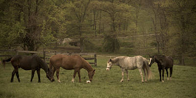 Pony Photograph - Love Visiting The Seniors by Trish Tritz