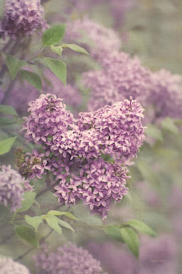 Photograph - Lovely Lilac by Cheryl Davis