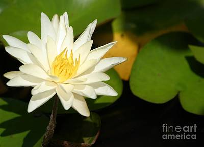Photograph - Lovely Lily by Living Color Photography Lorraine Lynch