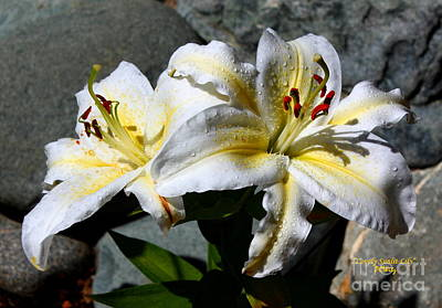 Photograph - Lovely Sunlit Lily by Patrick Witz