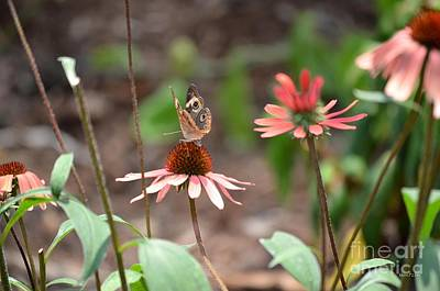 Photograph - Lover Of Coneflowers by Maria Urso