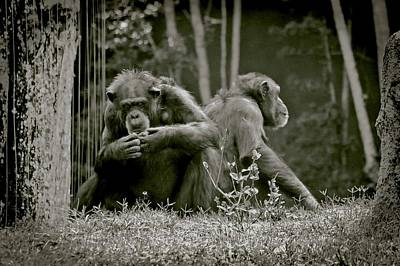 Spats Photograph - Lovers Spat Amongst Primates by DigiArt Diaries by Vicky B Fuller