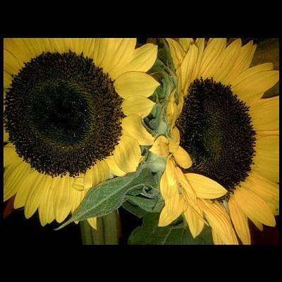 Bouquet Wall Art - Photograph - Love's Love~ #sunflower #flower by Chris T Darling