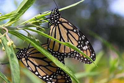 Photograph - Loving Butterflies by Jeanne Andrews
