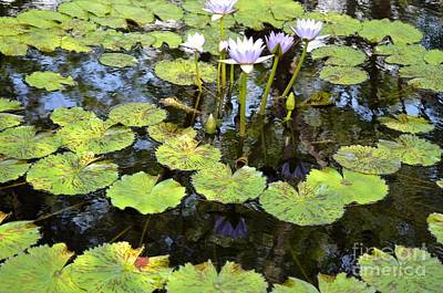 Photograph - Loving Lilypads by Maria Urso