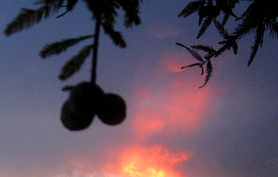 Photograph - Low Hanging Fruit by Juliana  Blessington