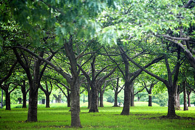 Low Trees In Flushing Meadows-corona Park Art Print