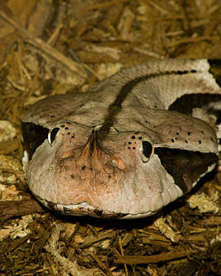 Reptile Skin Photograph - Lower Than Low by Trish Tritz
