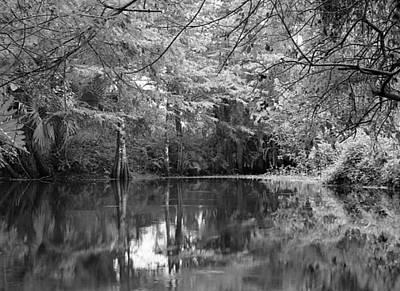 Landscape Photograph - Loxahatchee River Black And White by Michael Dubiner
