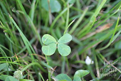 Photograph - Luck To All by Scenesational Photos