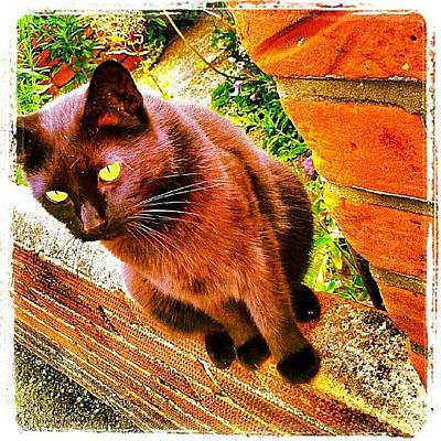 Norfolk Wall Art - Photograph - Lucky #cat #catsofinstagram #instacat by Invisible Man