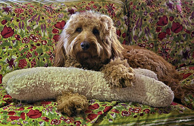Golden Doodle Photograph - Luke With His Bone - Golden Doodle by Madeline Ellis
