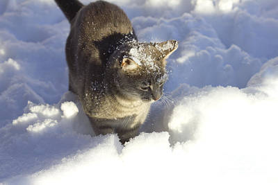 Photograph - Lulu Loves Snow by Donna L Munro