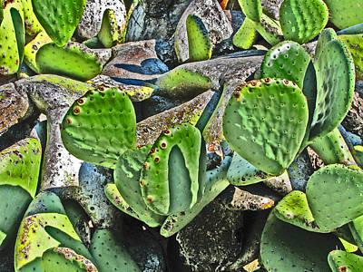 Photograph - Luminous Cactus by Samuel Sheats