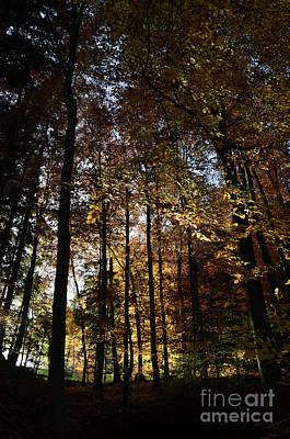 Luminous Forest 2 Print by Bruno Santoro