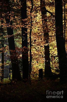 Luminous Forest 3 Art Print