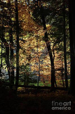 Luminous Forest 4 Print by Bruno Santoro