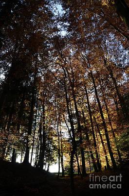 Luminous Forest 5 Print by Bruno Santoro