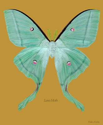 Digital Art - Luna Moth by Walter Colvin