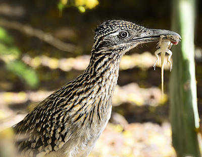 Roadrunner Photograph - Lunch Anyone by Saija  Lehtonen
