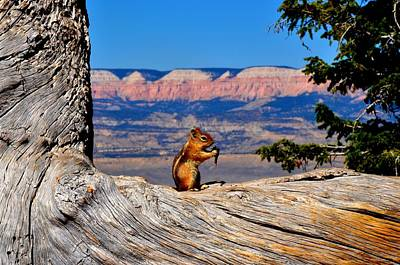 Photograph - Lunchtime At Bryce by Mark Bowmer