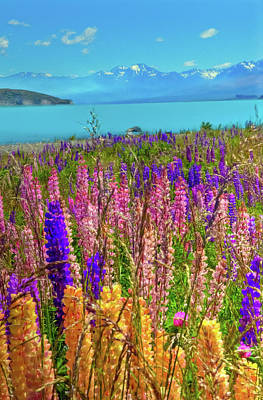 Photograph - Lupine At Lake Tekapo by Harry Strharsky