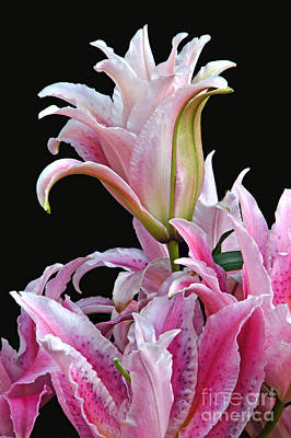 Luscious Lilies Art Print