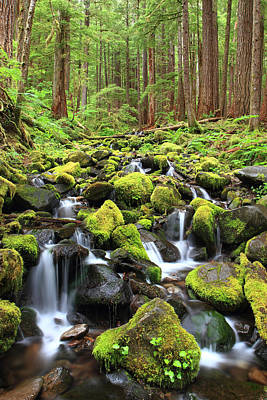 Lush Creek Olympic National Park Art Print