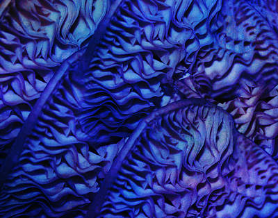 Photograph - Luxury Blue by Paula St James