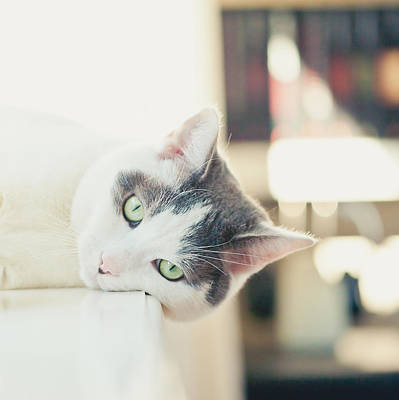 Y120817 Photograph - Lying Cat by Cindy Prins