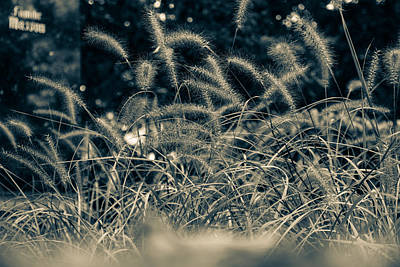 Photograph - Lying In The Grass by Andreas Levi