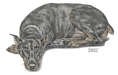 Pinscher Drawing - Lying Low - Doberman Pinscher Dog Print Color Tinted by Kelli Swan