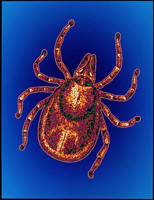 Lyme Disease Tick Art Print by Pasieka