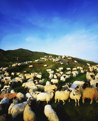 Maam Cross, Co Galway, Ireland Sheep Art Print by The Irish Image Collection